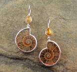 Amber & Ammonite Earrings