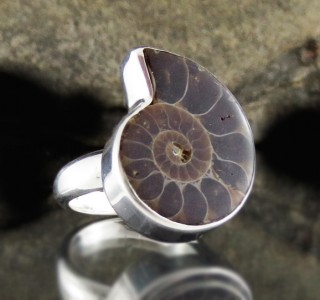 Ammonite Ring