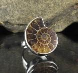 Ammonite Ring